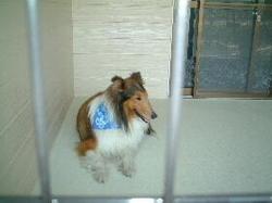Dogpark31e90ff