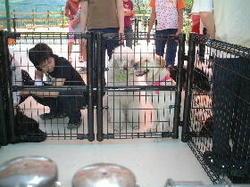 Dogpark41e90ff